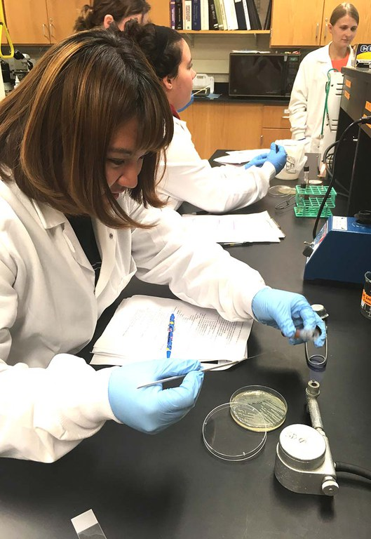 FDSC 409 students working on identification of microorganisms isolated from food.